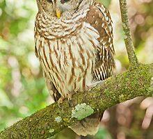 Baard Owl  by John  Kapusta