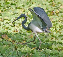 Tip Toeing Through the Swamp! by John  Kapusta