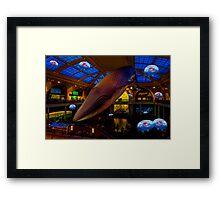 Something's up in the Milstein Family Hall of Ocean Life Framed Print