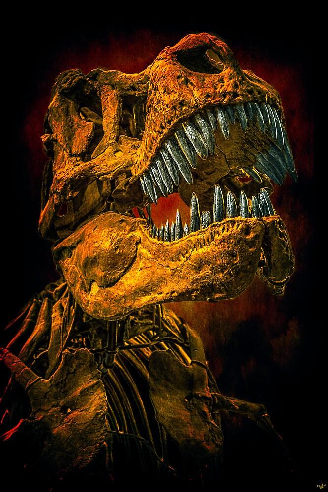 Bone Head by Chris Lord