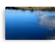Ducks, Water and Reflections Canvas Print