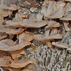 Spring Fungus by Gary Horner