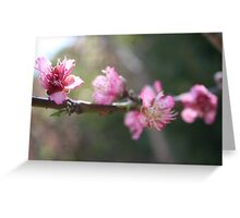 A Bough Of Blurred Peach Blossom Greeting Card