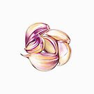 Garlic Clove Cluster by Jennifer Gibson