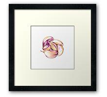 Garlic Clove Cluster Framed Print