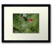Blossom_1301 Framed Print