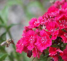 Blossom_1310 by POESIEDELAVIE