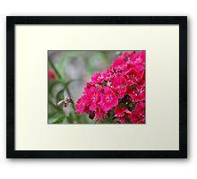 Blossom_1310 Framed Print