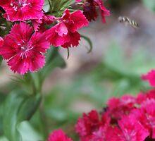 Blossom_1311 by POESIEDELAVIE