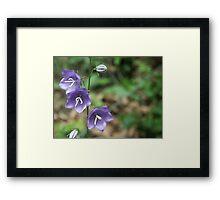 Blossom_1312 Framed Print