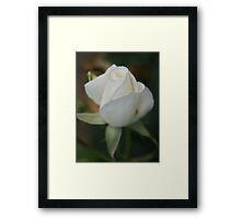 Blossom_1315 Framed Print