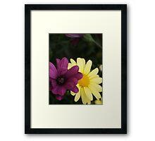 Blossom_1317 Framed Print
