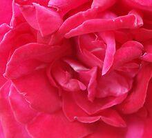 Blossom_1320 by POESIEDELAVIE