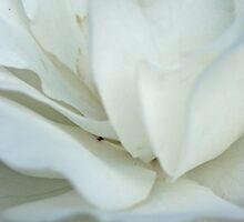 Blossom_1322 by POESIEDELAVIE