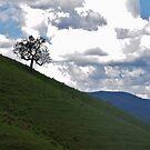 Hillside Sentinel by Liz Worth