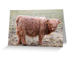West Highland cow Greeting Card