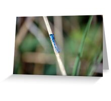Common Blue Damsel Fly Greeting Card
