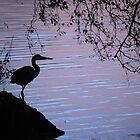 Heron before sunrise by Adam Nicholson