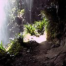 Natural Arch, Springbrook National Park.. QLD by MardiGCalero