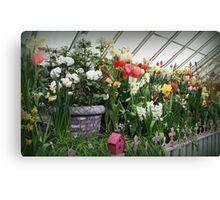 Flower Show Time! Canvas Print