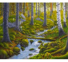 Spring creek Photographic Print