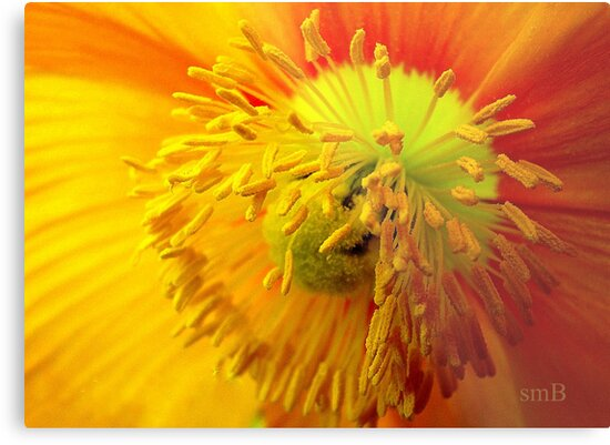Fancy Invitation For A Bee by Susan Bergstrom