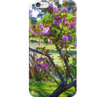 Pink blossoms at Ripponlea iPhone Case/Skin