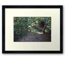 Forest_1303 Framed Print