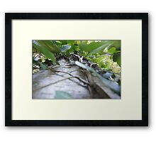 Forest_1304 Framed Print