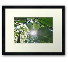 Forest_1309 Framed Print