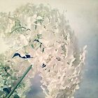 Romantic Hydrangea by Angela Bruno