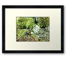 Forest_1324 Framed Print
