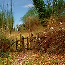 A Gate, To Who Knows Where  by hootonles