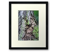 Forest_1319 Framed Print