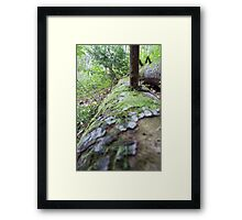 Forest_1313 Framed Print