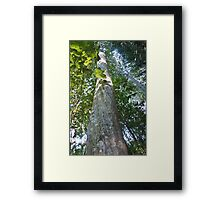 Forest_1306 Framed Print