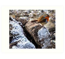 Robin ( The angel of birds ) Art Print