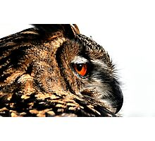 Eagle owl up close Photographic Print