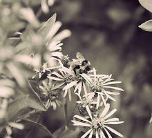 Beartooth Bumble Bee by Deborah Thomes