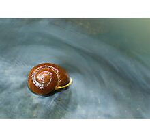 Snail in Stream Photographic Print