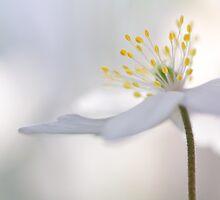 Gorgeous You!!!... by Bob Daalder