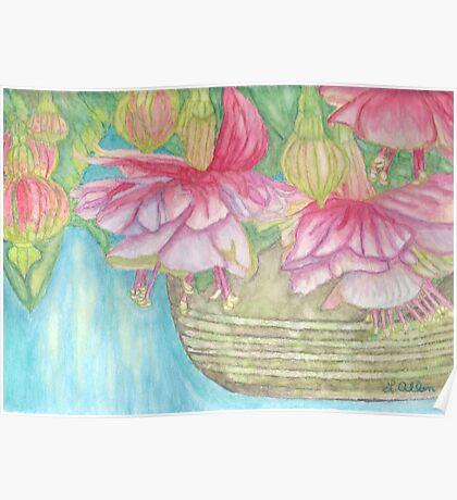 Fuschia Basket Watercolor Poster