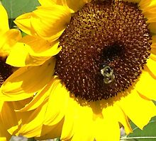 The Bumble Bee Flower by EliseMarie