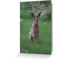 Spring Gardens Hare Greeting Card