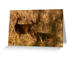 Spring Gardens Deer 2 Greeting Card