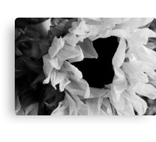 Sunflower 1 Black and White Canvas Print