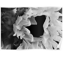 Sunflower 1 Black and White Poster