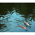 Koi swimming together by michelleshustac