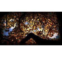 Autumns Window Photographic Print
