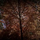 Autumn Sun by Martice